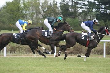 course,chevaux