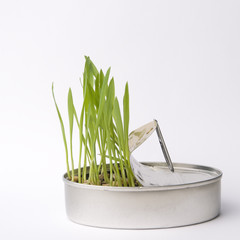 grass from can