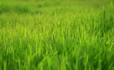 Photo of a green glade with a young grass