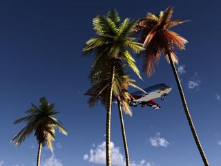 Plane And Wild Palms 4