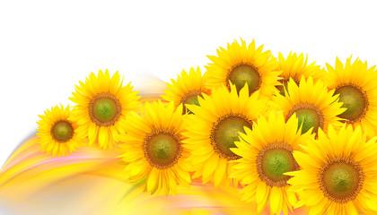 Sunflower petals on a rainbow