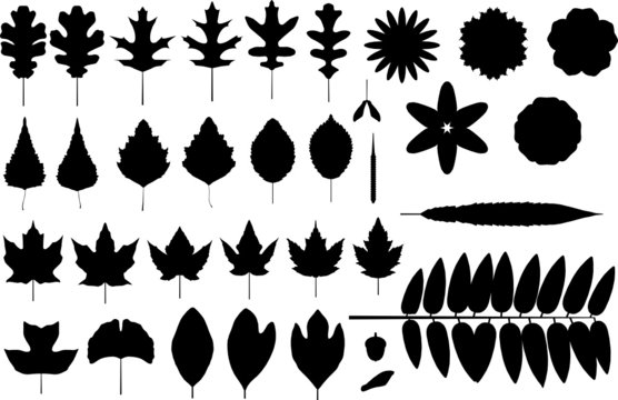 vector silhouettes of leaves and flowers