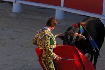 torero 1