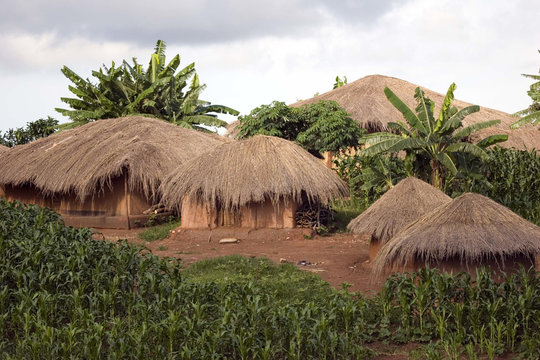 Thatched huts
