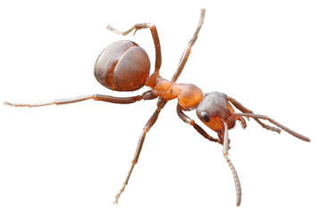 Ant isolated on withe