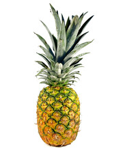 Single pineapple