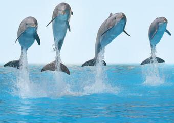 Foto auf Acrylglas Delphin Delphine springen