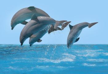 Photo sur Aluminium Dauphins Delphine springen