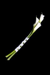 calla lily wrapped in silk, isolated over black