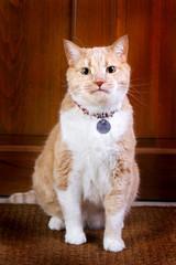 Fido, the guard cat