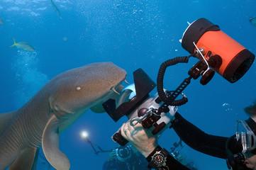 Shark Shootout