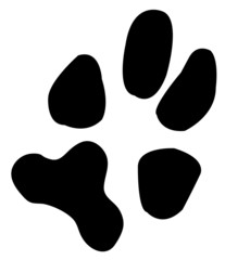 one single paw print from a dog