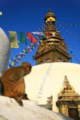 Singe à Swayambhunath