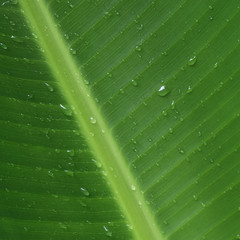 Background of green leaf with rain drops