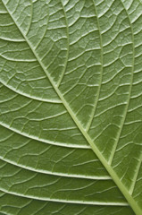 close uo of a green leaf