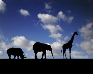 animals walk