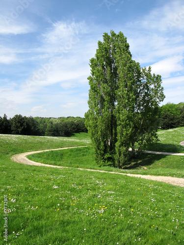 Sentier sinueux pelouse et arbre ciel bleu photo for Pelouse tarif