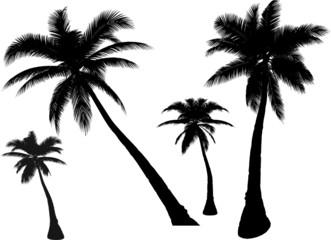 4 vector  palms