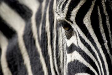 Spoed Foto op Canvas Zebra zebra eye