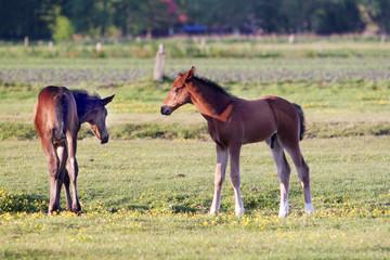 Weidende Pferde - Horses