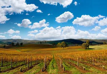 Fototapete - Beautiful Autumn Vineyard