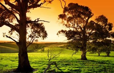 Fototapete - Sunset meadow