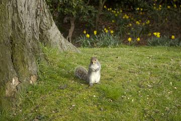 squirrel,