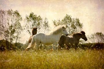 Horses playing around.