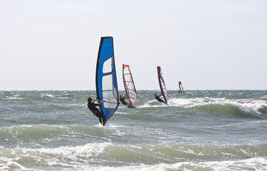 sailboarders