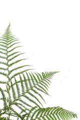 border of ferns