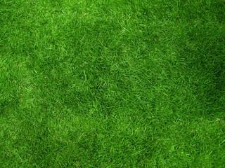 Aluminium Prints Green pelouse