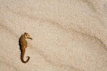 Seahorse on the beach