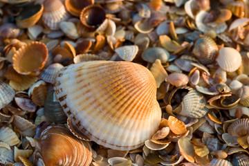 sea-shell texture