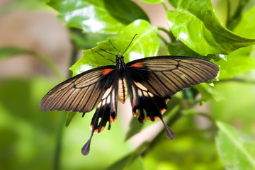 The beautiful tropical butterfly