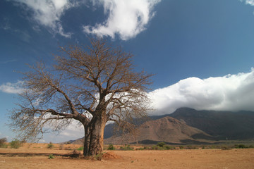 Baobab tree against cloudscape