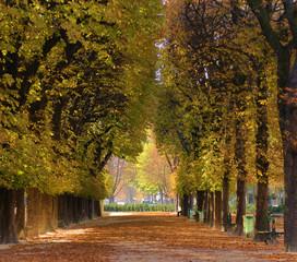 Poster de jardin Paris Alley of trees in autumn