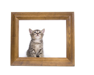 Kitten in a picture frame