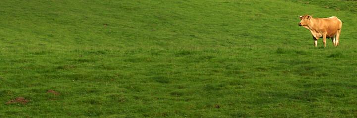 herbe et vache