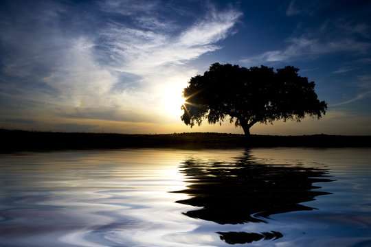 landscape with lonely tree with water reflexion in sunset