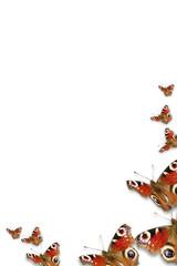 cornice farfalle 2