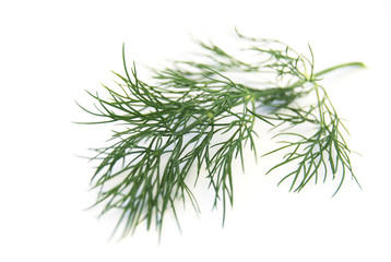 dill leaf on a white background