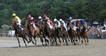 cheval,course,chevaux,galop