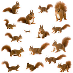 Fotorolgordijn Eekhoorn arrangement of squirrels