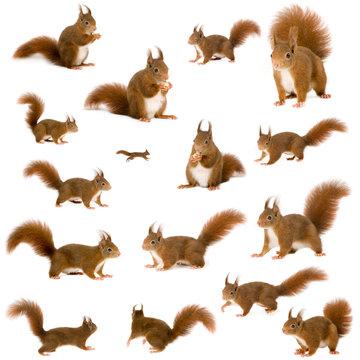 arrangement of squirrels