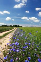 Road through summer countryside