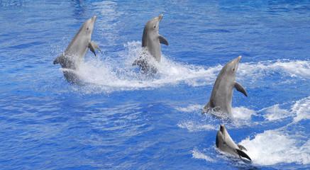 Delfini spettacolo