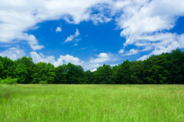 Landscape with forest and meadow under blue sky