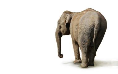 Papiers peints Elephant éléphant