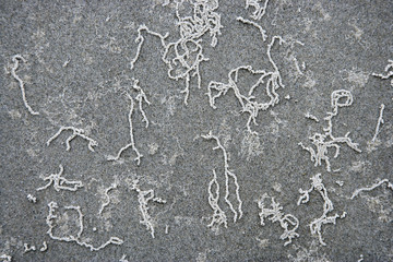 Squiggles in sand.