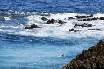 swimmer in boiling sea at rocky shore, El Hierro, Canary Islands